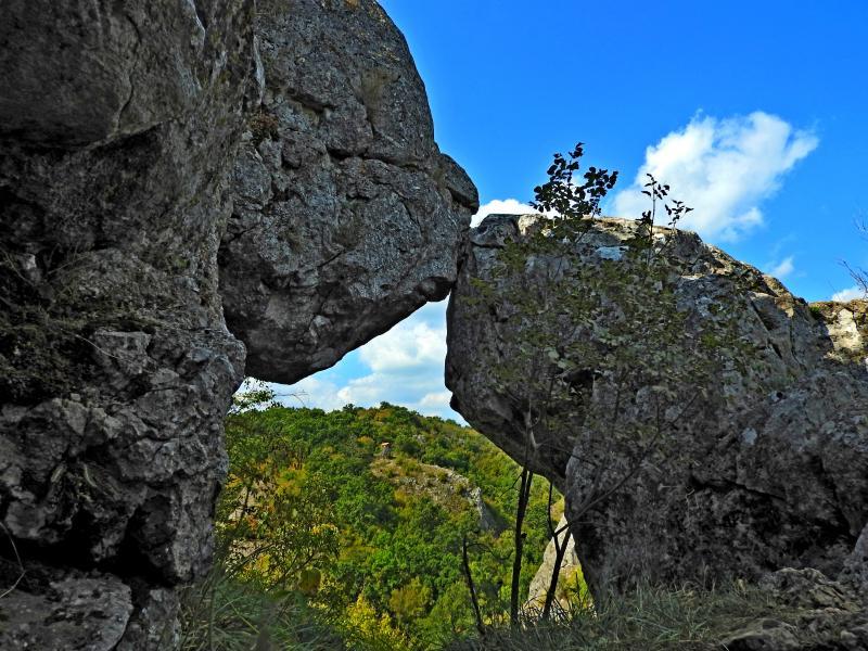 Празник на гората край Младежко