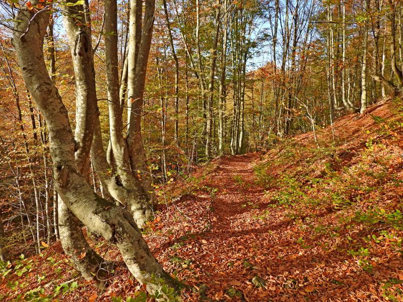 Вековни гори и параклиси около село Бръшлян