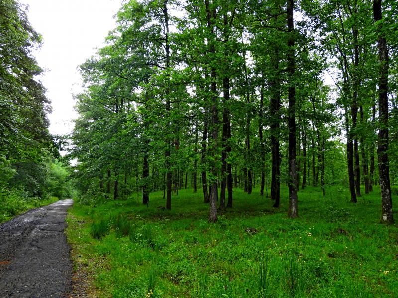 В зелената гора на Странджа. Село Писменово