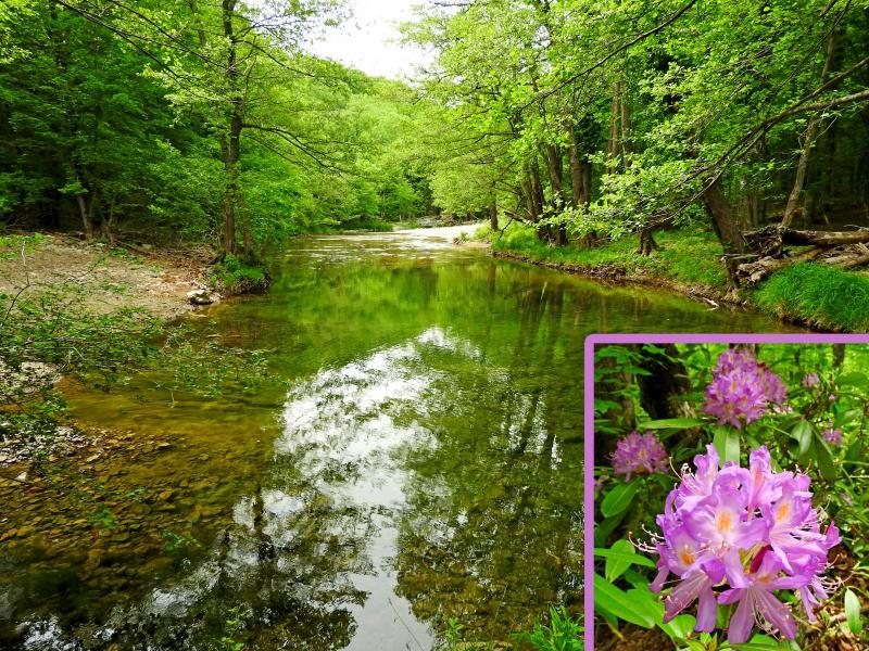 ИЗВЪНРЕДНО И В СЪБОТА: Водопад Скока - резерват Тисовица