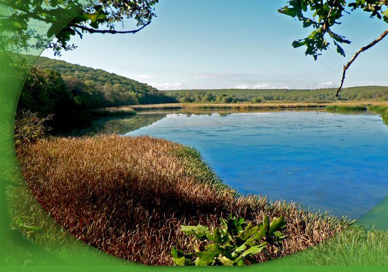 Мандренско езеро - по следите на орела. ДЕТСКИ ПОХОД